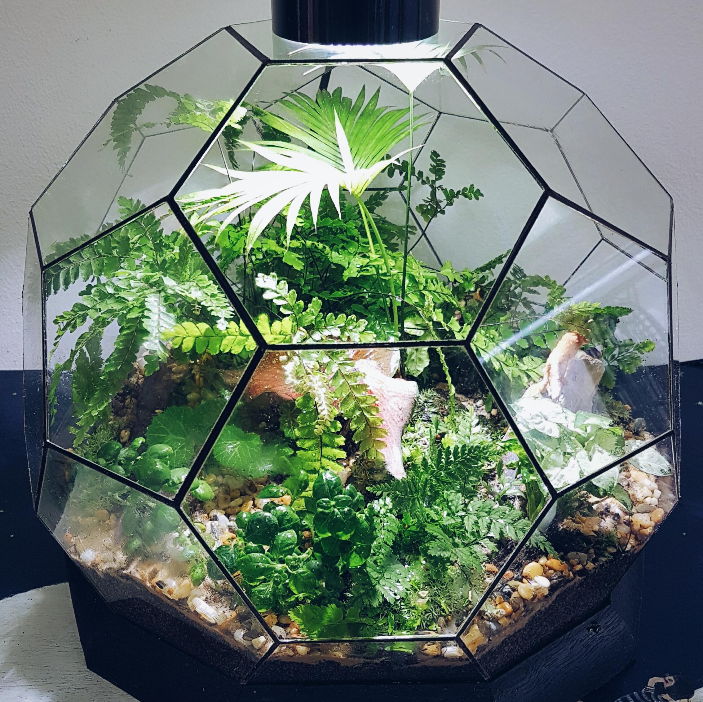 Indoor Fairy Garden Ideas
